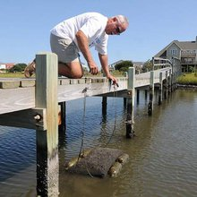Chadwick Bay couple grows oysters in the backyard