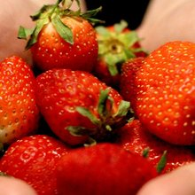 Science taking a stab at strawberry viruses