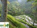 Anda Sumatra | Public Profile