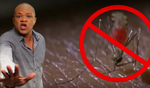 This has to be the catchiest dancehall tune ever about a mosquito-borne virus
