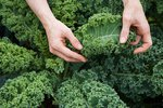 Collards vs. Kale: Why Only One Supergreen Is a Superstar