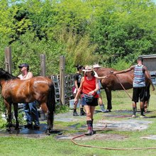 Rescue facility hosts National Help a Horse Day event