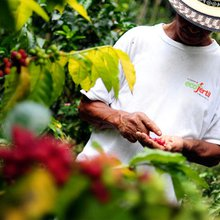 How Mobile Apps For Farmers Could Help Fight Rising Coffee Prices