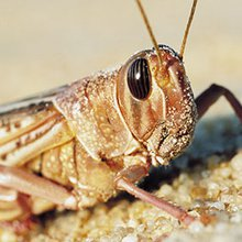 Insects can help feed the world - and chickens