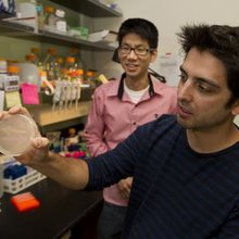Synthetic biology: Stanford, UC Berkeley engineering a new frontier