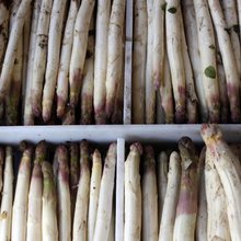Notes From the Recipe Tester: A Short Season for White Asparagus