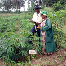 A Cassava Revolution Could Feed the World's Hungry