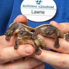 25 Of The Cutest Baby Animals Born This Year
