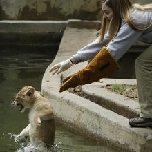 #WSJCaption Contest: The 'Lion Cubs Learn to Swim' Edition