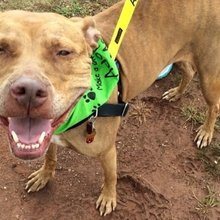We Borrowed A Shelter Dog To Go Hiking. You Can -- And Totally Should -- Too