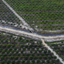 Palm oil: NGOs condemn reinstatement of IOI's sustainability certification