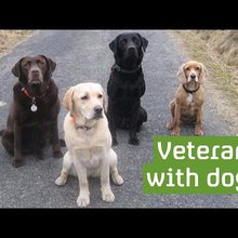 The dogs helping veterans overcome mental health issues - for Channel 4 News
