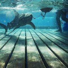 Explorer helps capture, study threatened sharks in Brazil