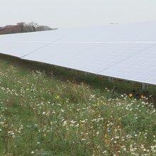 Biodiversity is vital for solar developers