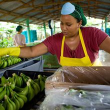How Fairtrade bananas are failing migrant workers