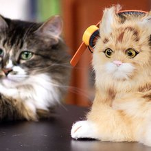 Headphones For Cats: Just One Idea From Spur, A New One-Stop Viral Video Shop