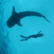 "Scientists create a ""Dow Jones"" for ocean health"