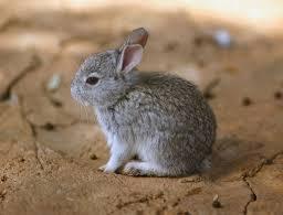 Anna Bunny on Muck Rack