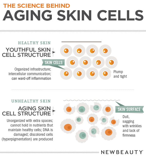 Skin Care Infographic: Infographic: The Science Behind Aging Skin Cells