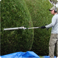 companies that offer tree trimming, shrub and bush pruning near me