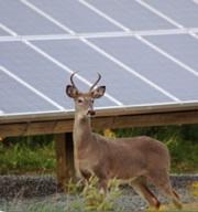 Mass Audubon Solar