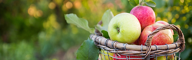 Healthy apple recipes that are easy to make and delicious.