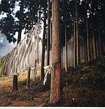 Forest Prayers, Darjeeling - Dinesh  Khanna - EDITIONS 24-Hour Auction
