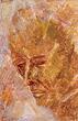 Akbar  Padamsee - Summer Art Auction