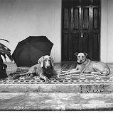 Front Porch with Dogs, D'cruz Residence, Saligao - Prabuddha  Dasgupta - 24-Hour Online Absolute Auction: Editions
