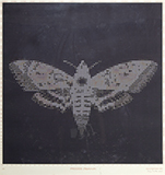 Process (Hawkmoth) - Baiju  Parthan - Art Rises for Kerala Live Fundraiser Auction