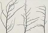 Untitled - Zarina  Hashmi - Winter Online Auction