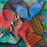 Senaka  Senanayake-Butterflies