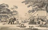 Oriental Field Sports - Captain Thomas Williamson - Antiquarian Books Auction
