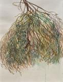 Sneh  Mehra-Dry Holy Basil