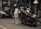 Suhasini  Kejriwal-Untitled
