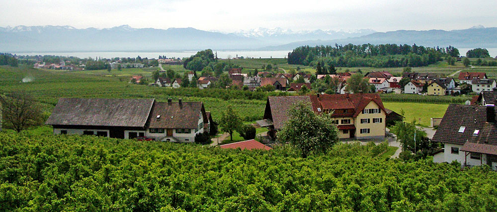Die Antoniuskapelle inmitten der Weinberge in Wasserburg am Bodensee