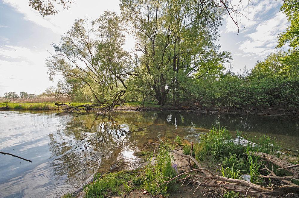 Naturschutzgebiet Lipmachmündung bei Immenstaad am Bodensee