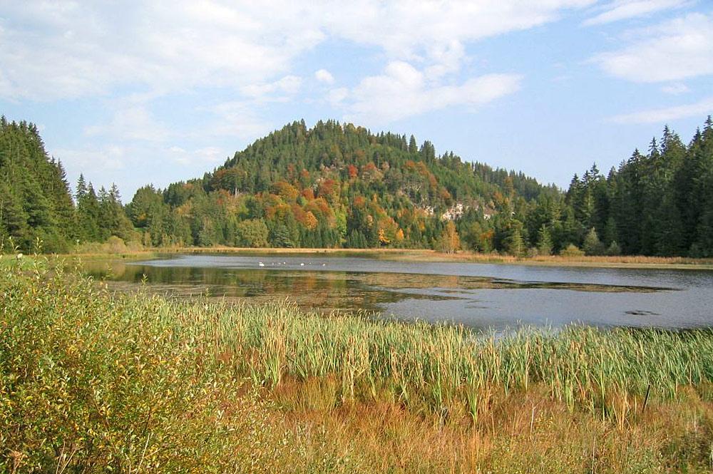 Schilf am Ufer des Schlossweihers im Moorgebiet bei Eisenberg