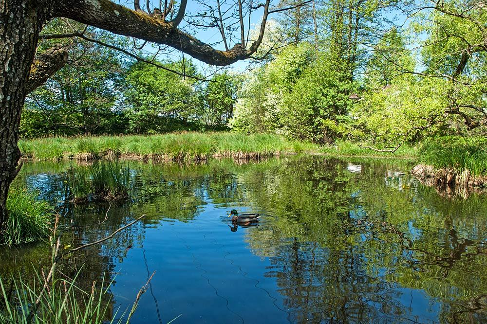 Teich im Rinner Waldmoor