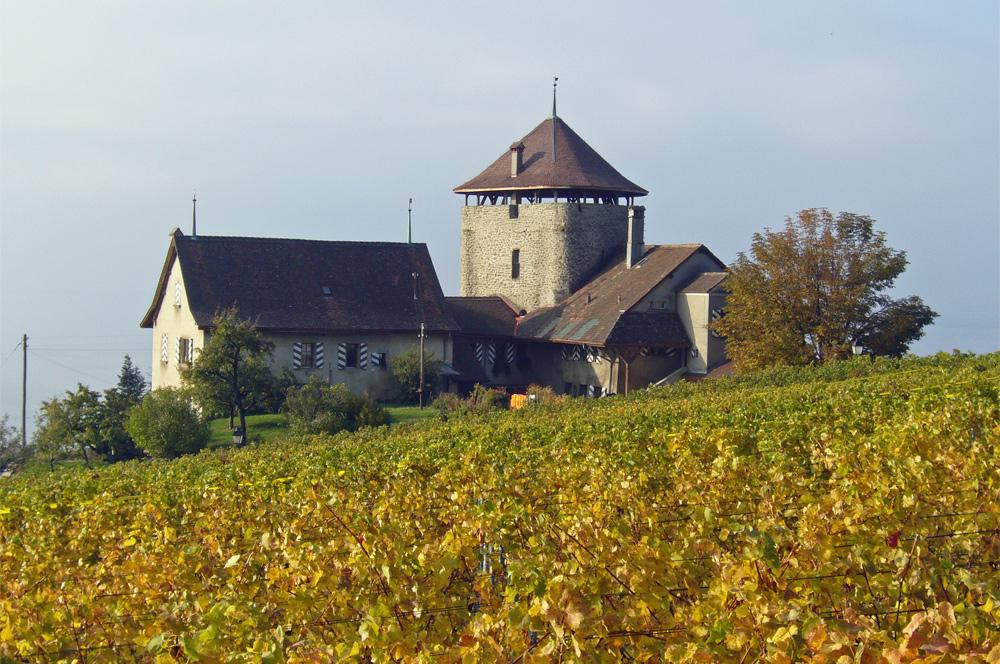 Blick auf den Berthold-Turm in den Weinbergen um Lutry