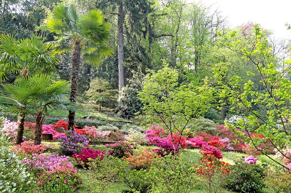 Blumen in den Botanischen Gärten der Villa Taranto in Verbania
