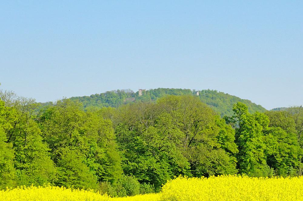 Naturschutzgebiet Rütihard bei Muttenz mit der Burgruine Wartenberg im Hintergrund
