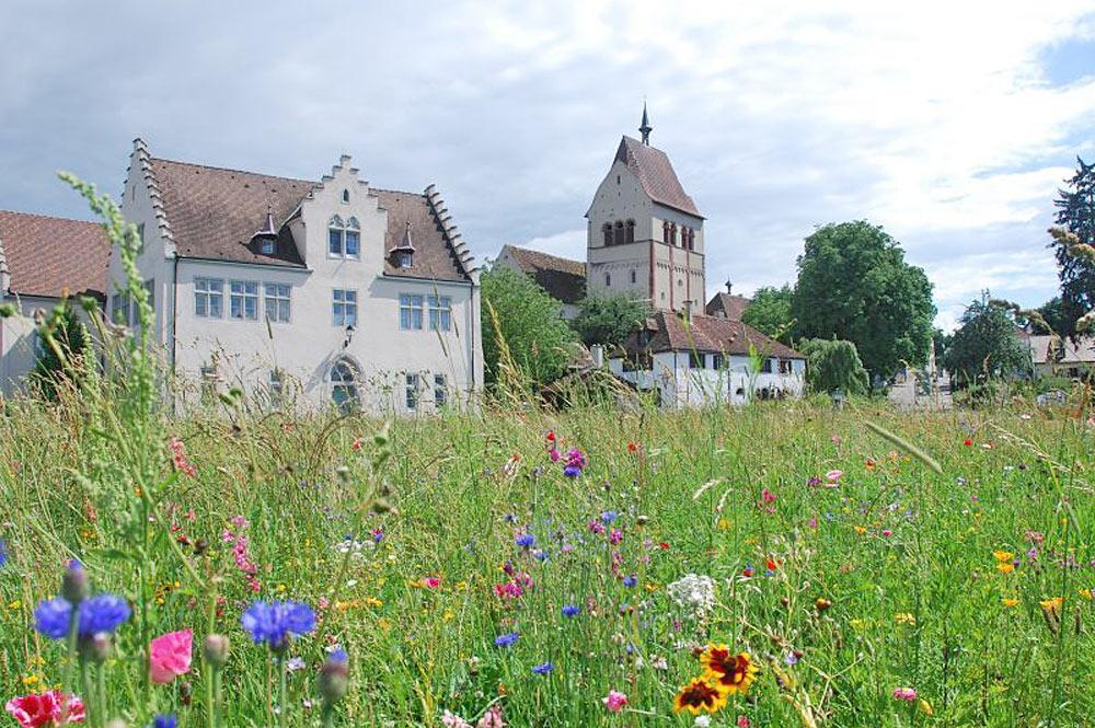 Kloster Reichenau im Bodensee auf einer Blumenwiese