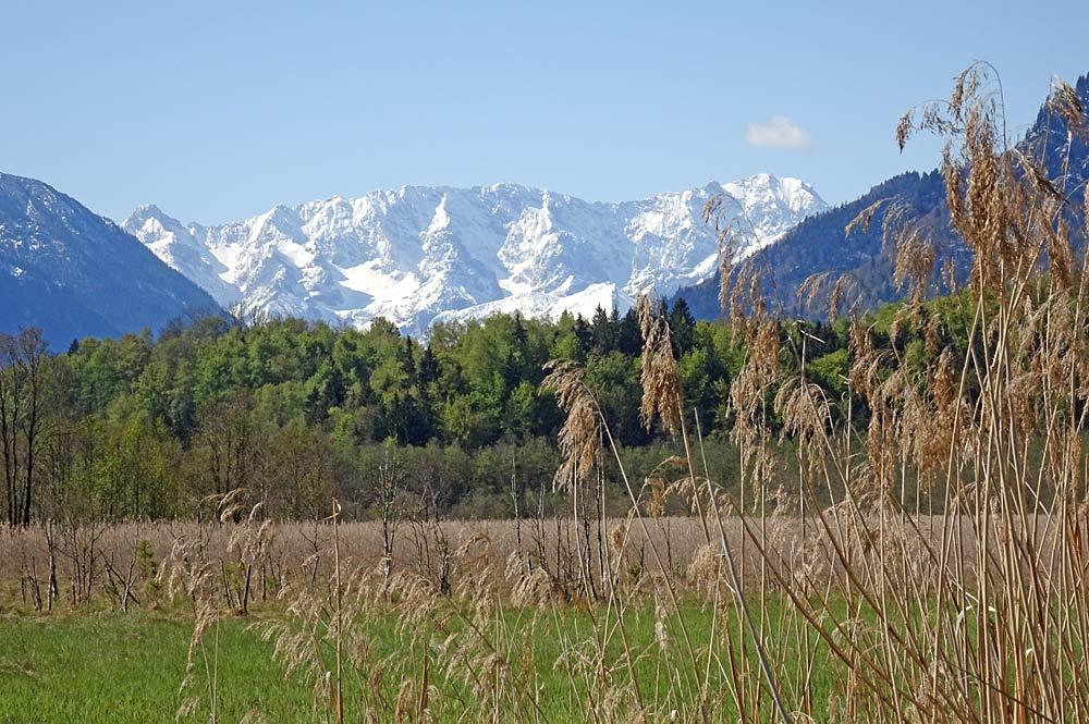 Naturschutzgebiet Murnauer Moos mit Wettersteingebirge im Hintergrund
