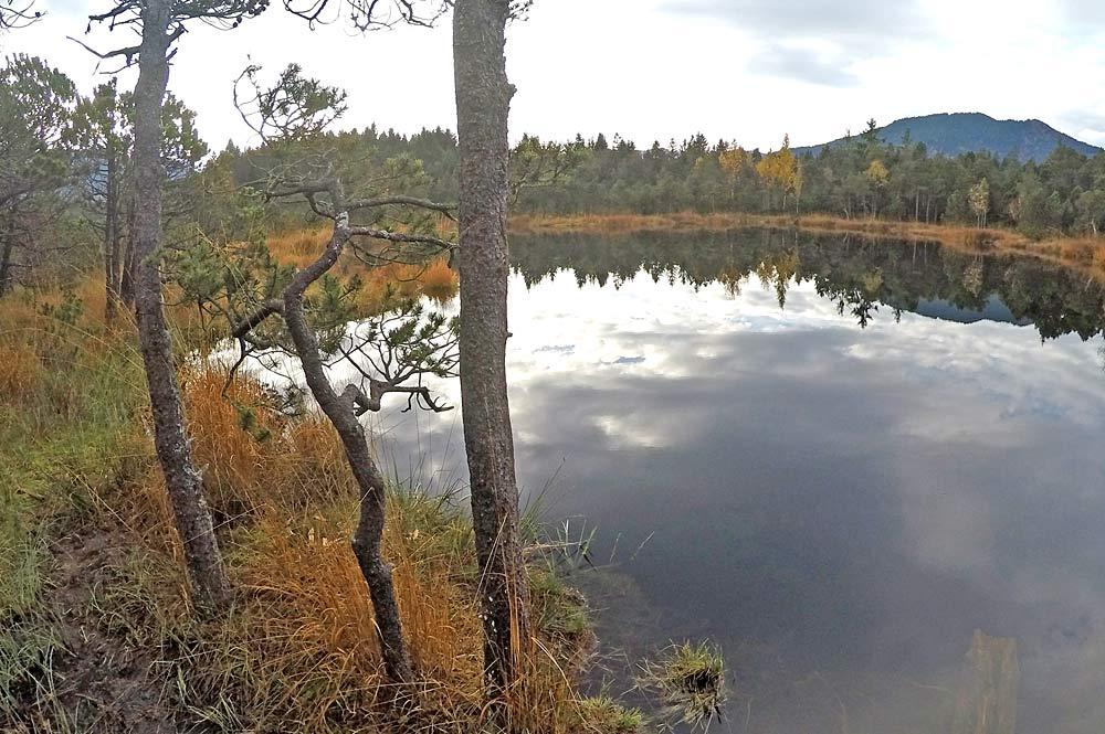 Blick auf den Tiefsee im Altenauer Moor