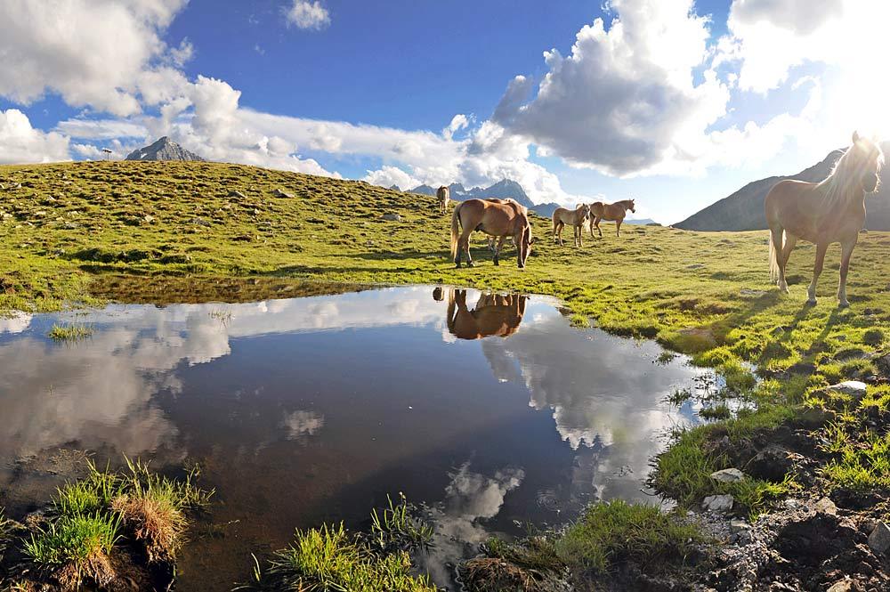 Islandpferde am Plenderle See bei Kühtai
