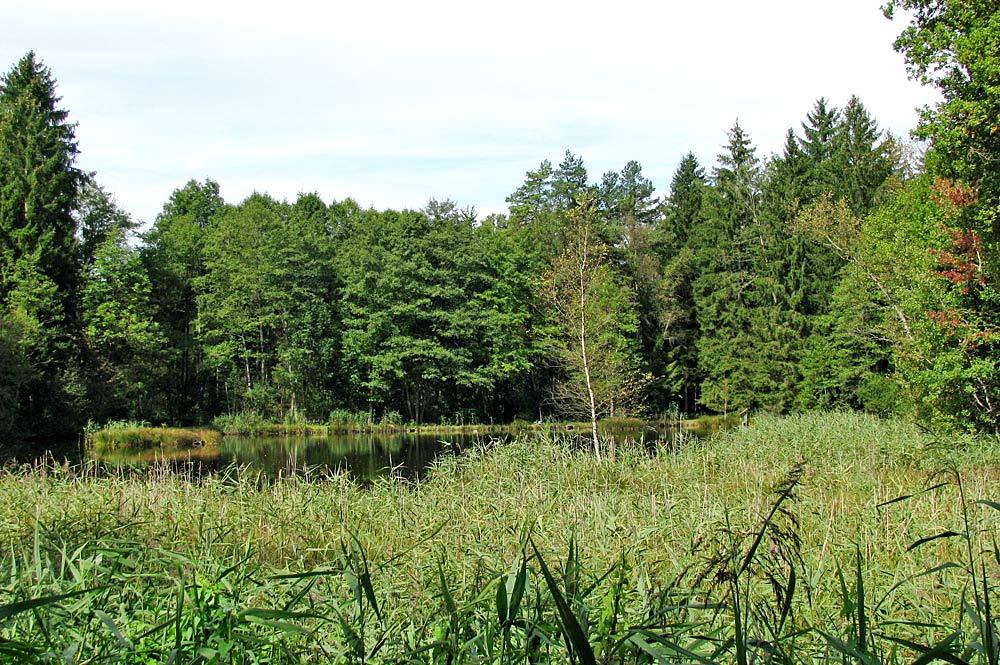Naturschutzgebiet Klosterfilz bei Dietramszell