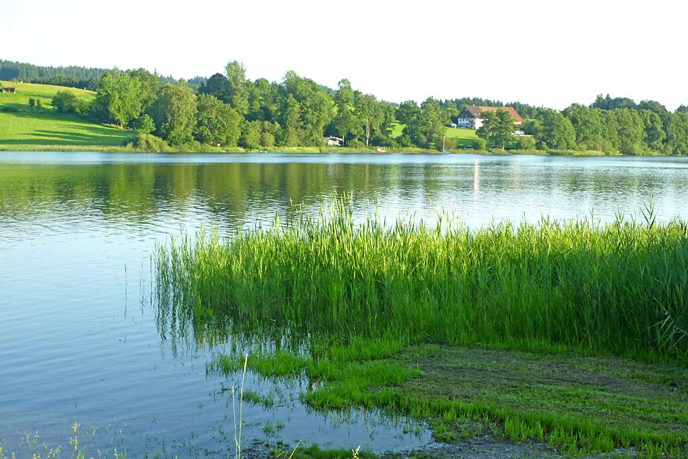 Naturschutzgebiet Badsee bei Isny