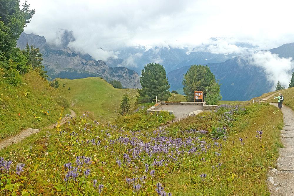 Der Botanische Alpengarten auf der Schynige Platte