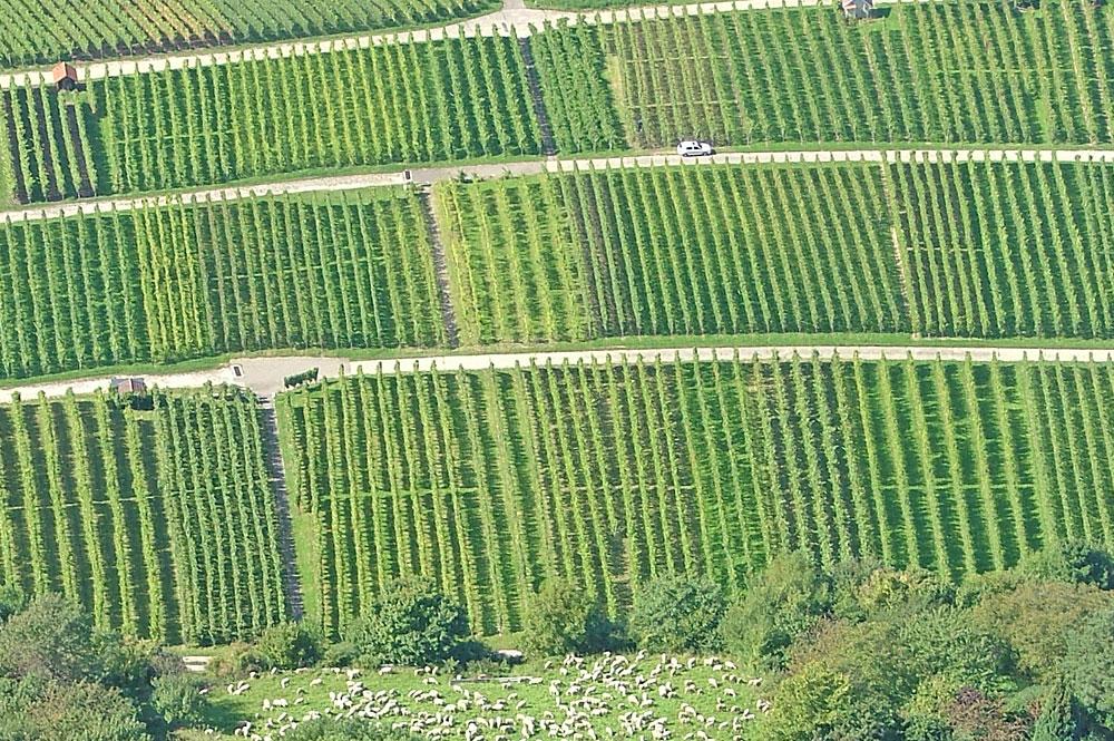 Luftaufnahme der Weinberge bei Neuffen